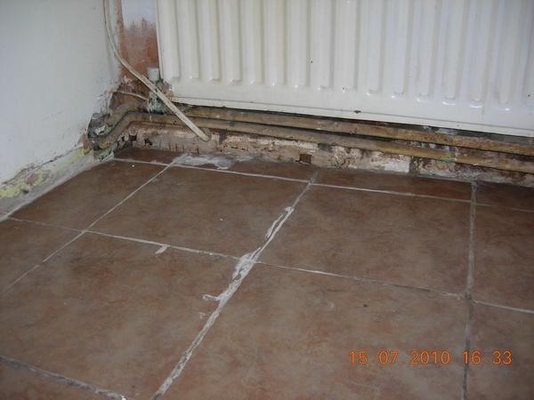 f1579-dscn2415-dry-rot