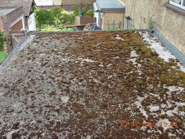 f1582-dscn2613-moss-on-flat-roof